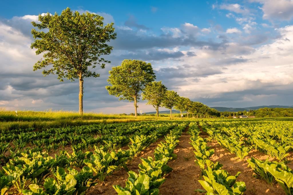 Как да подберем най-подходящата система за почвообработка?